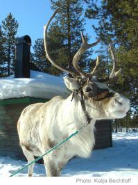 reindeer lodge 2013