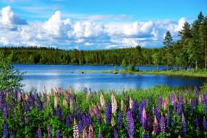 Tripodo_Schweden_Natururlaub_shutterstock_107838041