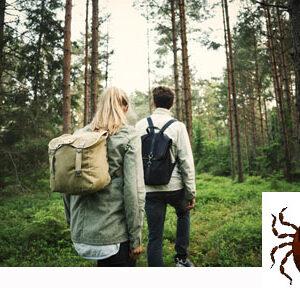 Nicht nur Schweden-Reisende müssen die Natur mit lästigen Zecken teilen. Foto: Maskot/ Folio / Imagebank Sweden.