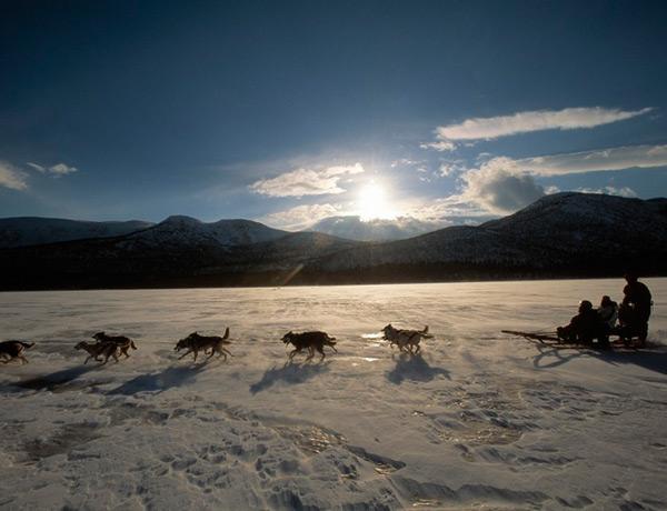 staffan_widstrand-dog_sledding_-1593
