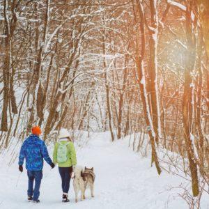 Egal ob in einem verschneiten Wald in Småland oder auf dem berühmten Kungsleden – eine abwechslungsreiche und spannende Zeit mit Hund lässt sich in Schweden fast überall erleben. Einige Dinge sollten Reisende mit Hund vorab allerdings wissen.  fotolia.de © Iryna (#192619381)