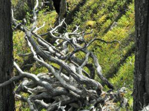 Ein naturgeschaffenes Kunstwerk im Muddus Nationalpark