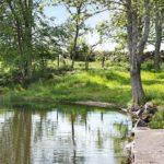 Ferienhaus in Schweden - See mit Steg umgeben von Natur