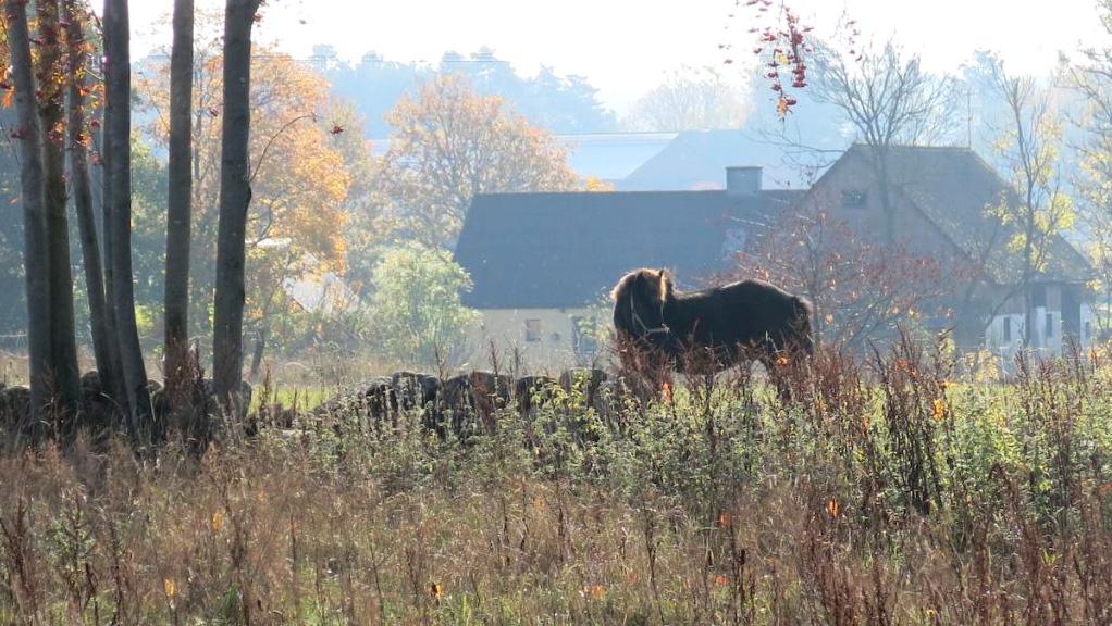 Kirschgarten Bauernhofurlaub