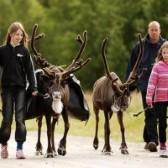Familie mit Rentieren in Schweden
