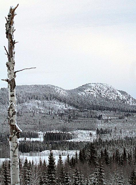 Berg im Schnee Bjurholm