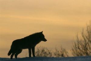 Foto: Staffan Widstrand/ Ekoturismföreningen