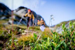Das Jedermannsrecht verbietet, geschützte Pflanzen zu pflücken.