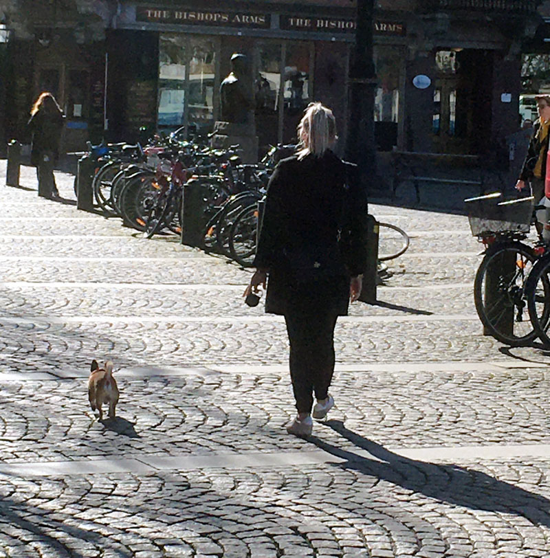 hundspaziergang