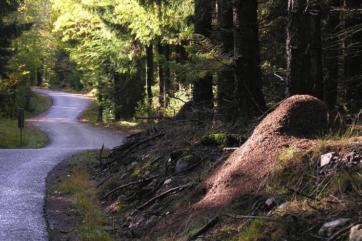 Insgesamt 370 Kilometer historischer Pilgerpfade führen durch Småland. Foto: www.visitsmaland.se