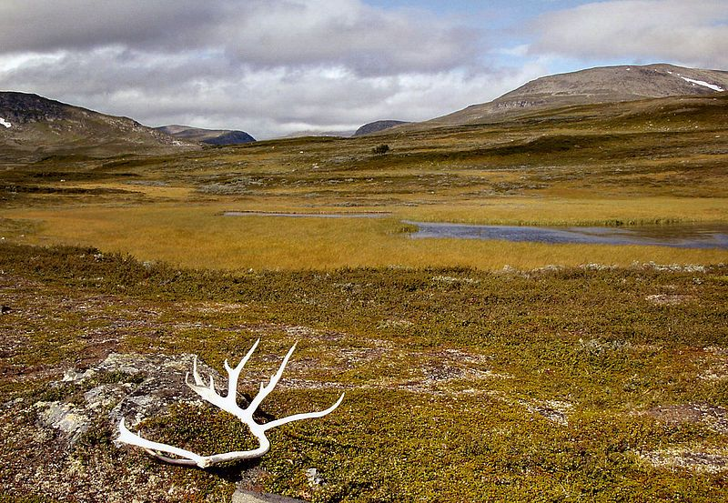 Wildes Jämtland: Im Vålådalens Naturreservat, Kulturland der Samen. Foto: Ökologix /commons.wikimedia.org