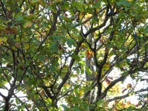 Wandern im schwedischen Herbstwald
