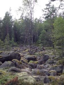 Steinfeld im Naturreservat Storasjöområdet