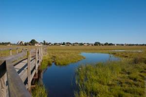 Trockene Heide und offene Wasserflächen wechseln sich auf der Halbinsel Falsterbo ab