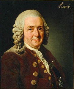 Gemälde von Carl von Linné Bild aus Wikipedia. Originalgemälde von Alexander Roslin. Fotograf: Greg L