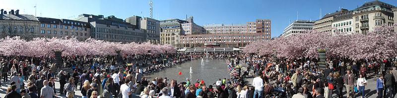 Kungsträgården während der Kirschblüte. Foto: Wikipedia, Larske