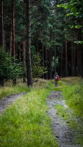 """Abschnitt des """"Nord till sydleden"""" in der Nähe von Snogeholm. Foto: Hannes Hofer"""