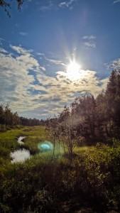 Wasserlauf inmitten der grünen Wildnis. Foto: Hannes Hofer